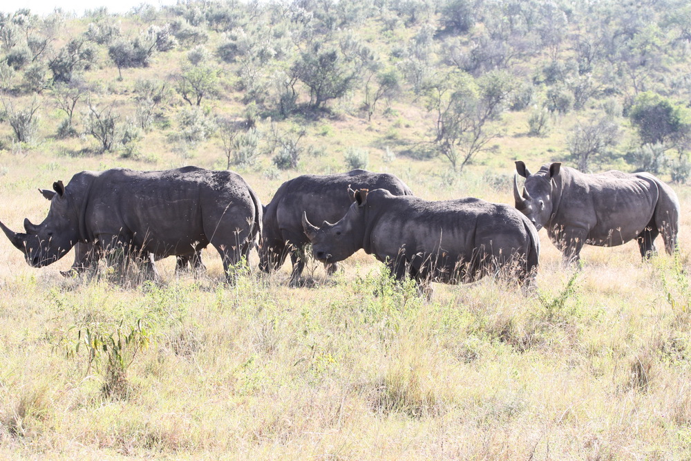 Vẻ đẹp hoang sơ ở Kenya