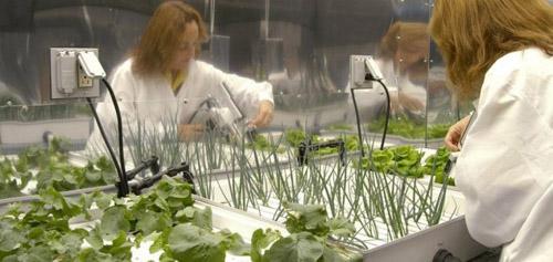 NASA thử nghiệm trồng rau trên vũ trụ
