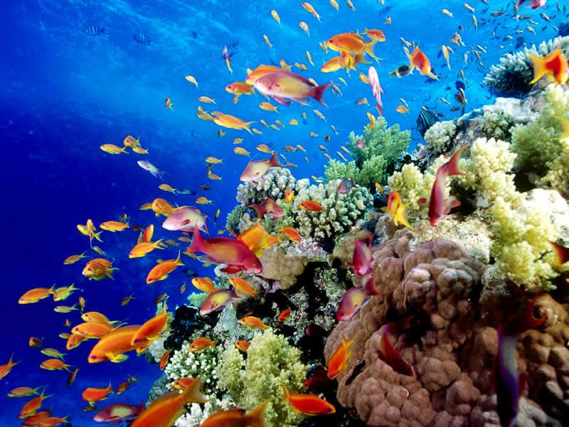 Great Barrierrạn san hô lớn nhất thế giới ở Úc