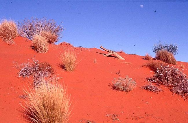 Phiêu lưu trên sa mạc ở Úc