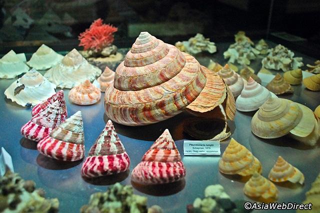 Bảo tàng sò biển độc đáo tại Phuket