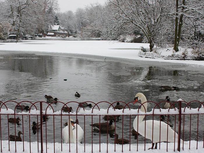 Queen's Park Snow - nơi vui chơi thú vị