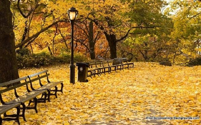 mùa lá vàng ở boston