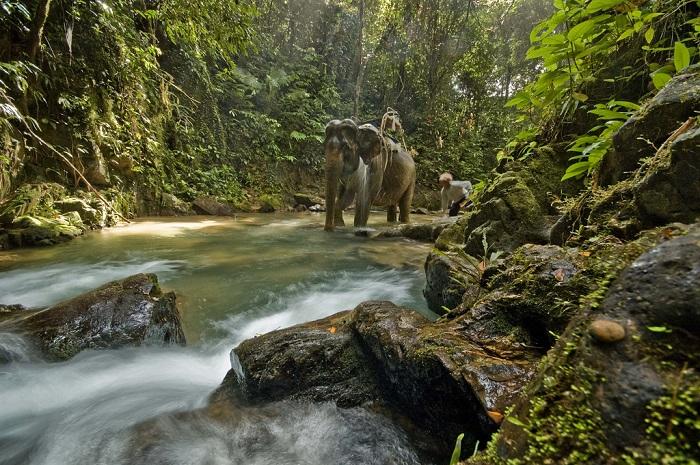 rừng mưa Khao Phra Thaew