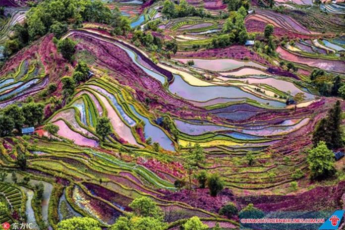 Ruộng bậc thang nhiều màu sắc của người Hà Nhì, Vân Nam, Trung Quốc