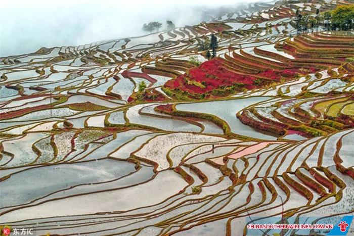 Những thửa ruộng đầy nước chờ mùa gặt sang năm