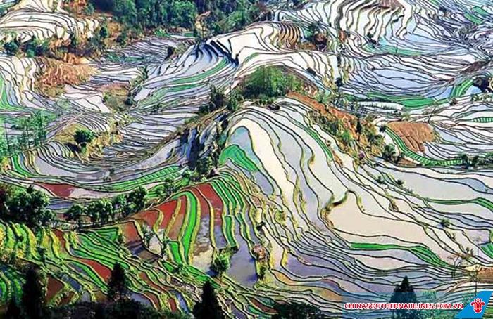 Khu ruộng bậc thang hút khách ở tỉnh Vân Nam, Trung Quốc