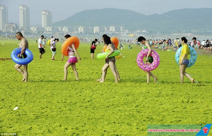 Bãi biển tảo xanh ở Thanh Đảo thu hút rất đông du khách đến tham quan mỗi năm