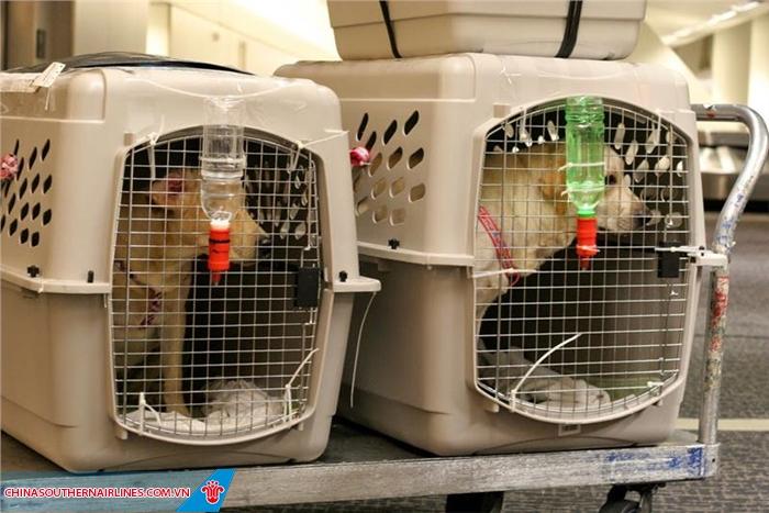Bạn muốn đi cùng vật nuôi, China Southern Airlines hỗ trợ như thế nào?