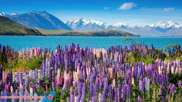 Mùa xuân về trên đất nước New Zealand