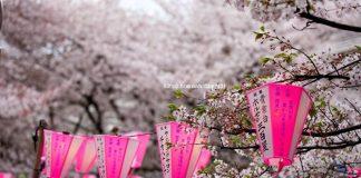 5 địa điểm có mùa xuân đẹp hút hồn