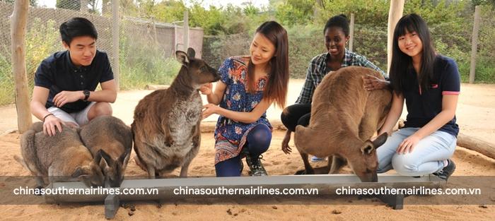 Sở thú Melbourne sẽ có nhiều trải nghiệm thú vị dành cho du khách